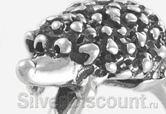 Моська серебряного ежика крупным планом